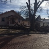 trees down in dodge one